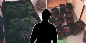 Cannabisplantor från mannens lägenhet och krukorna som hittades i mannens badrum. Bilder: Från polisens förundersökning.