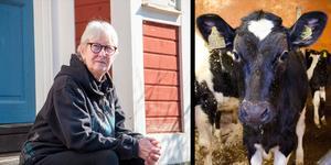 Lena Gerling, 71 år, i Björke blev plötsligt hjärtsjuk. Med hjälp av en inopererad klaff från ett kalvhjärta är hon nu frisk igen.