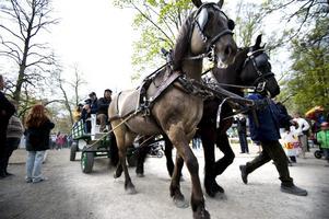 Häst och vagn i djurparaden