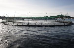 I satsningen ingår även att etablera en fiskodling i Frövi.