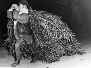 På 50-talet, när den här bilden togs, hade julgranen blivit tradition i de svenska hemmen.