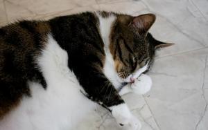Inte Strumpan men också andra katter kan göra det trivsamt hemma.