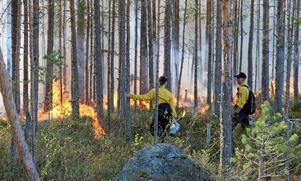 Foto: Länsstyrelsen i Västmanland. Bilden är tagen vid en annan naturvårdsbränning i naturreservatet Skommarmossen tidigare i år.