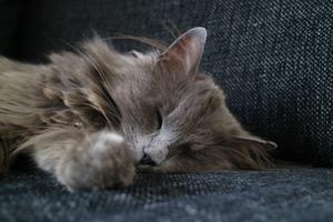 455) Här är hon, husvagnskatten Kitty som varit med i husvagnen ner till Skåne två gånger. Katten som gillar att vara i samma rum och nära men inte i knät. En självständig primadonna som vet vad hon vill! Foto: Daniel