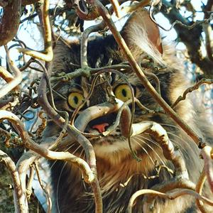 Rutan gömmer sig i trollhasselbusken. Bilden inskickad av Pernilla Airaksinen.