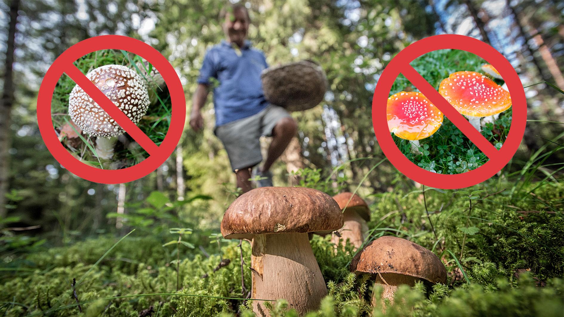 Varning: Plocka inte de här svamparna