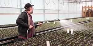 Janne Bohlin vattnar penséer på Norrängens trädgård. Annars är det tomat- och gurkplantorna som är de törstigaste växterna, framför allt på sommaren.