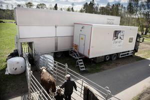 Järvsöföretaget Hälsingestintan lanserade för fyra år sedan Europas första mobila slakteri för nötkreatur.