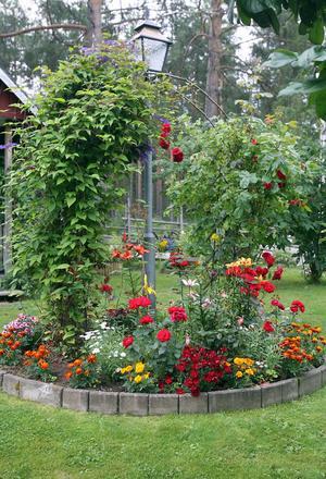 En ö i trädgården med växter. Fröna plockar Sonja ur själv och torkar för att plantera nästa år.