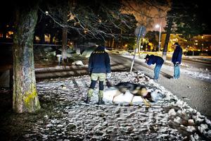 Bild från i söndags kväll när en brottsplatsundersökningshund arbetade med att söka efter spår intill Pettersbergsgatan. Hunden är specialiserad på att hitta hår, saliv och föremål som en människa hanterat. Även kriminaltekniker arbetade på platsen.
