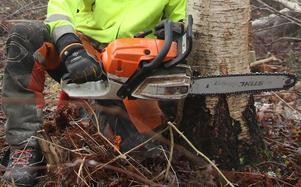 Skribenten berättar om en uppsågad trädgren. Foto: Arkivbild