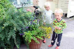 I sommar har Ebbe och Bo lärt sig hur viktigt det är med insekter.