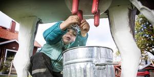 Bilden är från tidigare års skördefest på Fru Julianas Gård i Brynje.  Årets festligheter äger rum 14 och 15 september. Foto: Denny Calvo