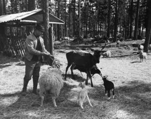 Många har åkt till Jössebo just för att titta på djuren. – Vi hade omkring 200 djur här samtidigt, berättar Björn Swartswe.