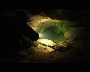 Närmare 300 meter av grottorna under Bjurälven har karterats under årets expedition och dykarna har även kunnat ta med sig ett tiotal fiskar upp till forskarna.