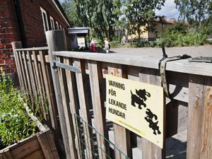 varning för blöta pussar. Den som öppnar grinden till Åmans hundcentra riskerar att bli överröst med blöta pussar från många kelsjuka fyrbenta charmtroll.