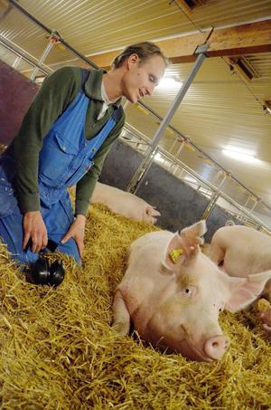 Bekanta. De yngre grisarna är lite skygga när det kommer människor. Men suggorna har vant sig, här kan Ludvig Nilsson och sugga nummer 5874 lugnt samtala med varandra.