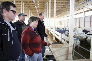 Gudrun Haglund-Eriksson har 350 tackor och har en vision om att utöka gårdens produktion av kött, skinn och ull, berättar hon för kommunalrådet Billy Ludvigsson (C), LRF-representanten Kjell Johansson och kommunstyrelsens ordförande Per Eriksson (S).