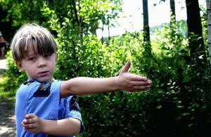 Expert. Med Aaron Norbäck, 6 år, är man trygg i skogen.