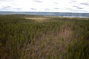 Skogsstyrelsen räknar med att 300 000 kubikmeter skog ligger kvar trots att det är olagligt efter 15 juli.