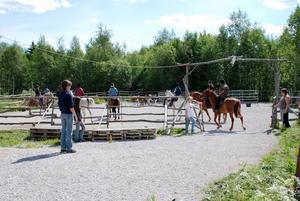 I mål. Efter ett tag kunde kursdeltagarna driva korna från hagen och in i fållan.