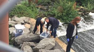 Polisen hittade klädrester i samband med att man dök efter den försvunna Fatima Berggren i Svartån.