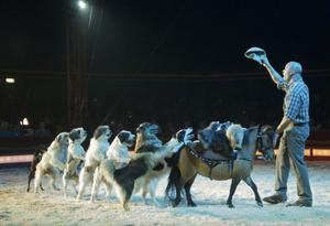 Enligt cirkusen själv håller tysken Wolfgang Lauenburger i ett av Europas bästa hundnummer. Publiken älskade när hundarna gjorde detta finalnummer och hundarna verkar stortrivas