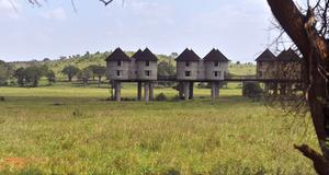 Safari innebär oftast att bo på lodge inne i nationalparkerna. Vanligtvis ser man djur redan vid morgonkaffet.
