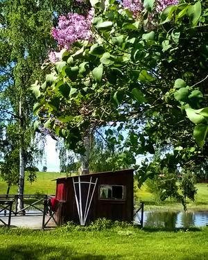 Nu kan vi njuta av fina juni.Bilden är tagen vid vår uteplats i Berg, Borlänge.