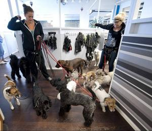 Många hundar i Gävle köar för en dagisplats.
