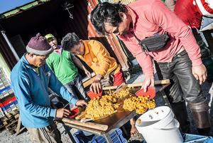 Arbetslaget hjälps åt att rensa bären som sedan körs i 10 kilos hinkar till bäruppköpare.