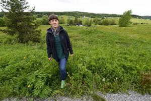 Lupinerna är ett hot mot ängsblommorna och det är biologen Annika Carlsson oroad över.