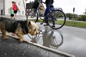 Övergången vid Baldersgatan används flitigt av cyklister, fotgängare och fyrfotingar. Men få cyklister i Norrtälje bär hjälm, enligt kommunen som har kartlagt oskyddade trafikanter i Norrtälje stad.