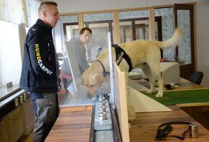 Anton Brammefors och Jakob Skoglund jobbar med hunden Kruse som i en specialdesignad apparat markerar metaller. Blixtsnabbt visar Kruse med nosen i vilken kopp metallerna finns.