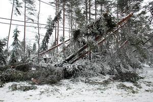 November, december och januari är högsäsong för strömavbrott. Åtminstone var det under dessa månader som det under 2015 inträffade flest strömavbrott.