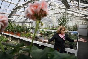 Carola Arnaryd blir orolig när hon hör att kommunen tror att Hedvigs Trädgård ska läggas ner...