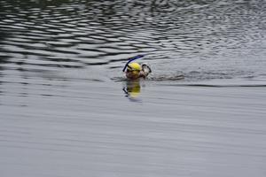 Mats Goldberg ska simma till  kusten 50 mil från starten i Hällsjön i nordligaste Dalarna.