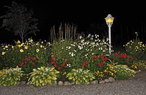 Septemberkväll i blomrabatten.