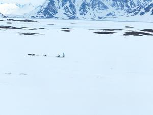 Från hotellfönstrret i Kulusuk på Grönland fick Knut syn på ett hundspann.