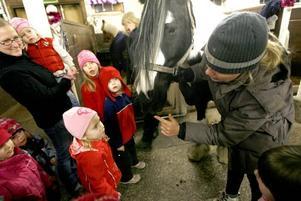 Jojjo Perman visar att även hästar har mustascher.