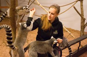 Victoria Höök blir uppvaktad när hon bjuder på russin. Lemurer älskar söta frukter och äter mycket päron och banan.