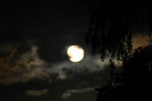 Sprang ut på gården när jag såg solen lysa ner på gräsmattan och fick en bild på Venuspassagen innan molnen tog över. Den lilla pricken uppe till höger är Venus.