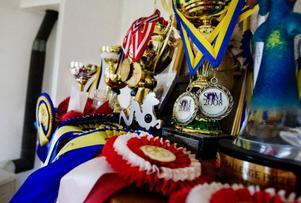 Hjalti Gudmundsson har vunnit både Svenska mästerskapen och Nordiska mästerskapen med Reynir de senaste åren, men en VM-medalj fattas fortfarande till prissamlingen.