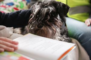 Det är inte alla hundar som passar som läshundar. Samtliga sex som används i projektet har fått genomgå flera prover, samt utbildas till att fungera i sammahanget. Dessutom tvättas de i speciella schampoon som gör att även elever med allergi kan läsa med en läshund.