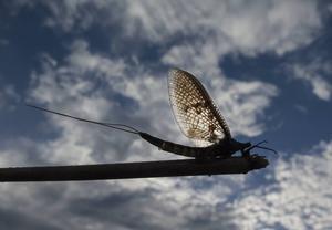 Insekter - Låg vinkel och lite motljus. Ett framgångsrecept.