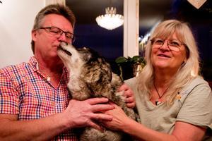 Tord och Agneta Olsson har sett björnar vid flera tillfällen tidigare, men aldrig på det här sättet.