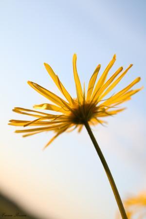 Bilden ger mig en sommarkänsla som jag vill dela med mig av i det regniga vädret, den ger ett lugn på något sätt.