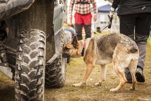 Sjuåriga schäfern Filippa har jobbat inom Försvarsmakten men numera är hon privatägd av Eva Holmgren. Här deltar hon i en uppvisning av nosework som  innebär att hundarna ska söka efter en droppe eucalyptus som gömts på fordonet.