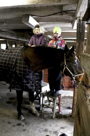 Knoppar man. Fanny Söderlund och Linnéa Elholm hjälps åt att knoppa manen på ridskolehästen Sebbe.