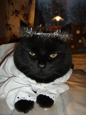 1. PINGLAN, SANDVIKEN. Pinglan är en diva som är katt i sitt eget hus. Samtidigt är hon en riktig kelgris som tycker om alla människor som hon har runt omkring sig. Lyckligast är Pinglan när hon får ligga och sova på någons mage, berättar matte Louise Westblom.